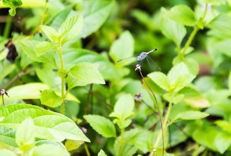 Dragonfly at Pang Sida National Park