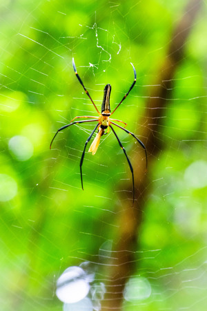 Spider on the spider web.