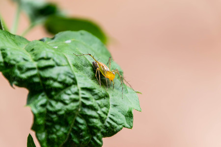 Spider on the leaf.