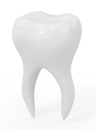 dental research: model of the ideal tooth