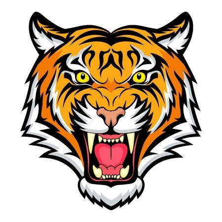 tigre blanc: tête de tigre
