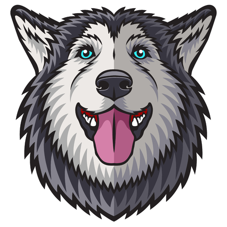 alaskan malamute: A Husky head. This is vector illustration ideal for a mascot and tattoo or T-shirt graphic.