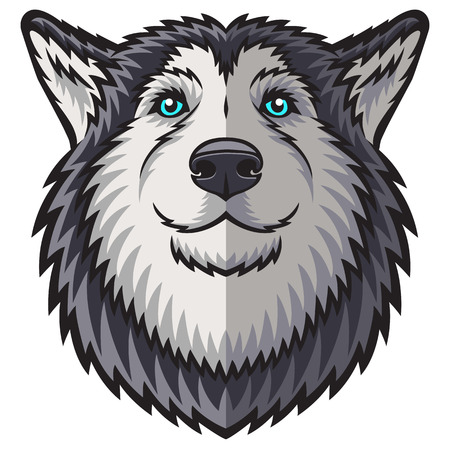 alaskabo: A Husky head. This is vector illustration ideal for a mascot and tattoo or T-shirt graphic.