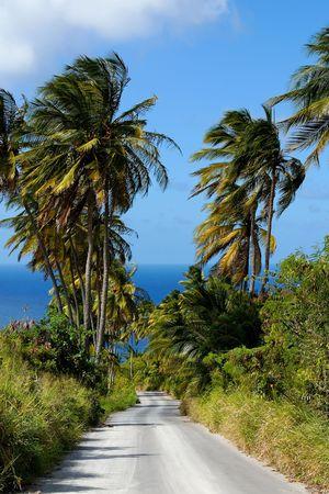 Road leading to the sea through palm trees Stock Photo