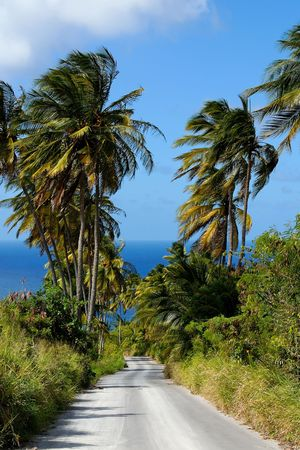 Road leading to the sea through palm trees Standard-Bild