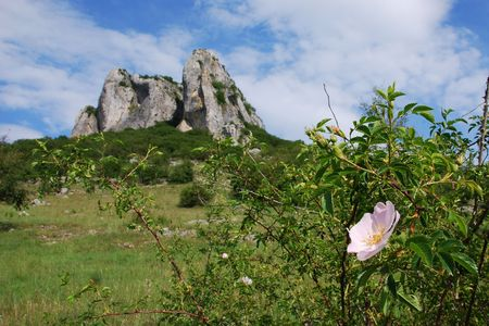 Flower with a rocky cliff and blue sky in the background       photo