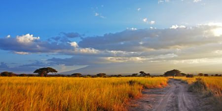 A road going through golden savannah planes photo