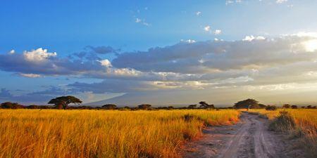 Una strada passa attraverso piani d'oro savana