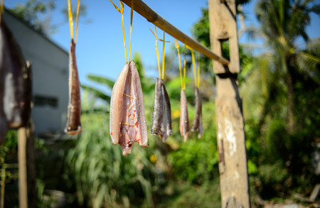 snakehead: Spiced and dried snakehead fish at Ben Tre province, MeKong delta, Viet nam, Southeast Asia