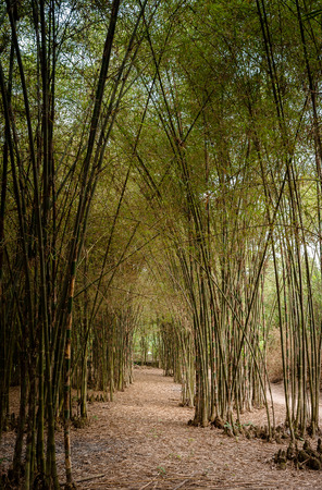countrylife: Bamboo Road, Trangbang district, Tayninh province, Viet Nam, SouthEast Asia Stock Photo
