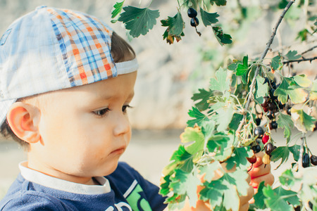 The little boy in the garden, gathers currants, summer cap