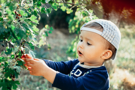 The little boy in the garden, gathers currants, summer cap