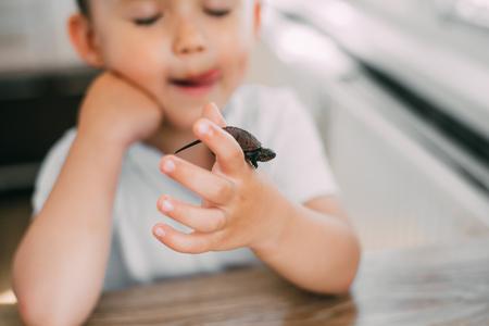Kleiner Junge, der eine Schildkröte hält, das Konzept der Pflege und Pflege von Tieren