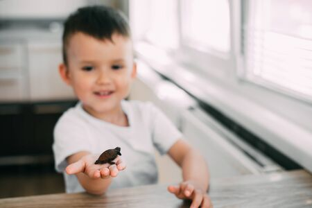 Little boy holding a turtle, the concept of caring and caring for animals