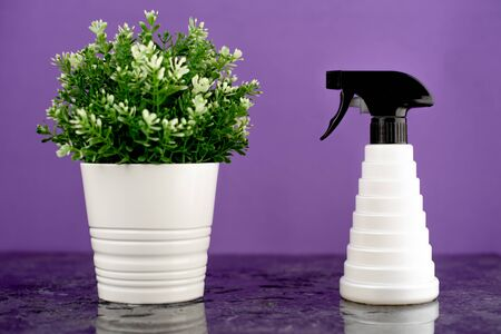 a Barber spray gun next to a potted flower is located on a black marble slab, with a black and white collar