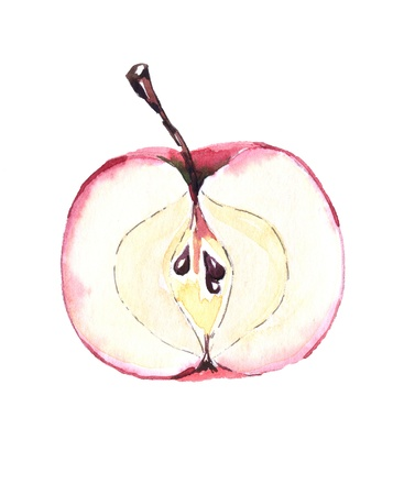 half an red apple, watercolor painting, illustration illustration