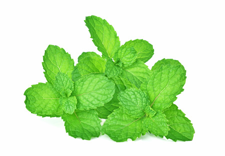 mint leafs herb. isolated on white background Stock Photo