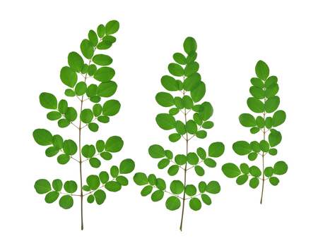 Top view of green moringa leaves,Tropical herbs isolated on white background Stock Photo - 107990623