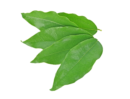 Top view of Yanang leaf isolated on white background