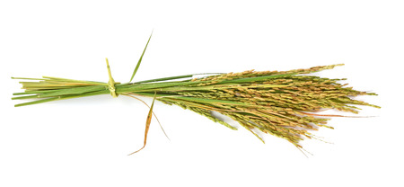 ear of rice  on white background