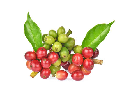 fresh coffee beans with green leaver isolated on white background Reklamní fotografie