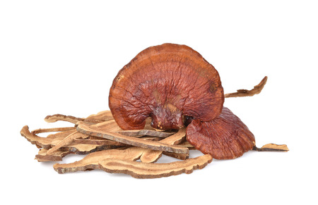 Ganoderma lucidum isolated on the white background.