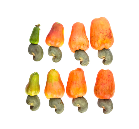 Top view of red cashew fruit isolated on white background 免版税图像