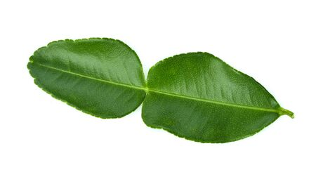 Bergamot leaf isolated on white background Standard-Bild