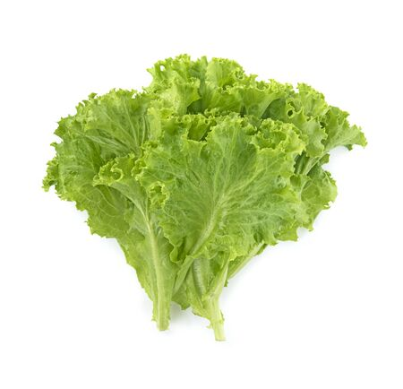 butter head lettuce,Crisp Head,Iceberg isolated on white background