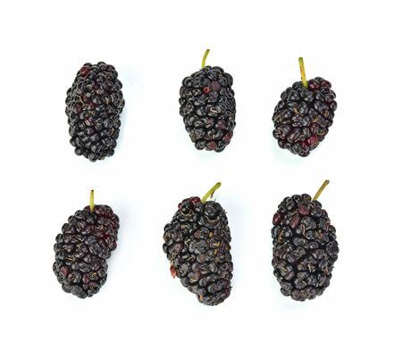 Morus (mulberry) isolated on white background