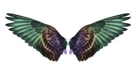 Wing on white background Standard-Bild