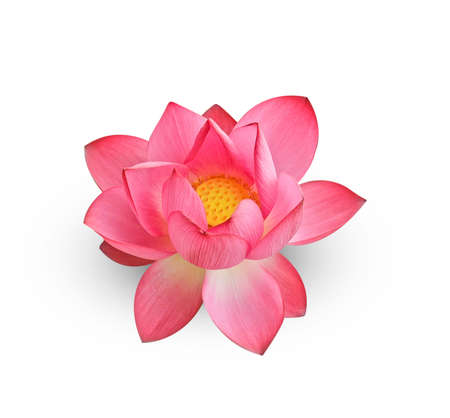 Lotus flower isolated on white background Imagens