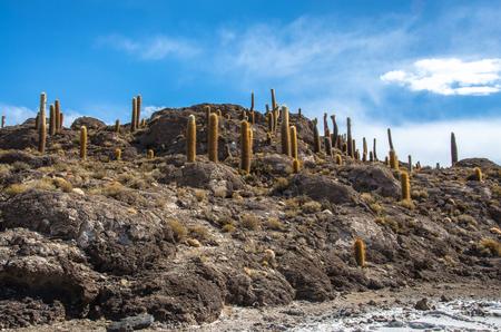 Incahuasi island, Uyuni Saline (Salar de Uyuni), Aitiplano, Bolivia Cactus island on Bolivia Stock Photo