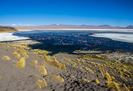 avaroa: Flamingoes in Laguna Colorada , Uyuni, Bolivia. Beautiful lanscape of Laguna Colorada