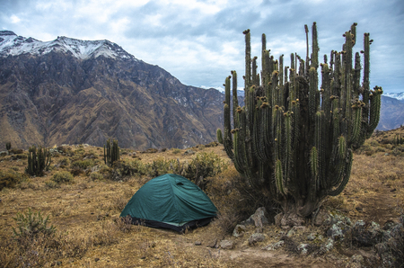 Camping at the Colca Canyon with big cactus, Peru. Tourist camping on the canyon Foto de archivo
