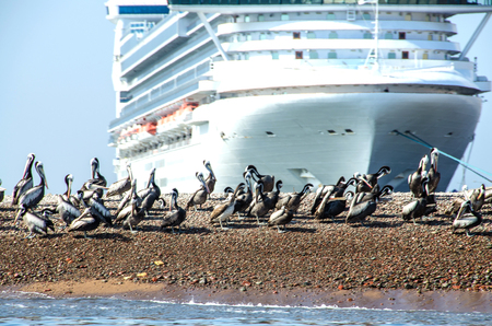 Big cruise boat near Paracas National Park in Peru with pelicans. Ica, Peru Stock Photo