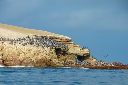 Paracas National Park in Peru with pelicans. Ica, Peru