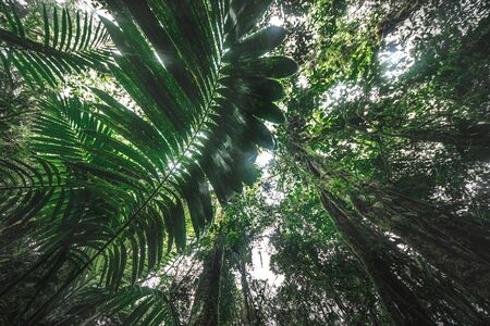 Tropical rain forest, Cerro Chato, Costa Rica
