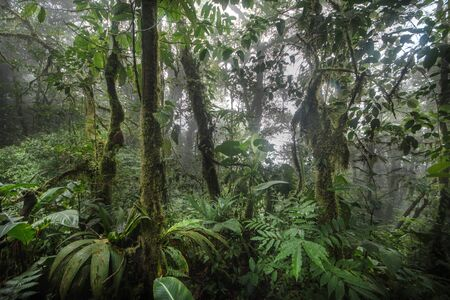 Green forest in a misty morning, Costa Rica. 免版税图像