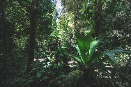 Jungle forest trees. nature green wood backgrounds