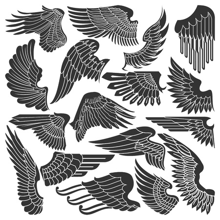 The  image Set sketches of wings