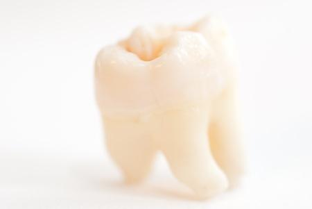 ivories: Macro shot of single tooth. Focus set on top edge, Rootes defocused
