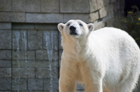 Polar Bears Stock Photo - 9948433