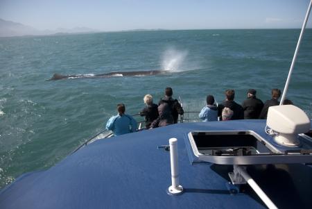 ballena azul: Esperma de ballena Massive respiraci�n en frente de ballena barco whatching