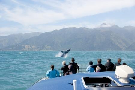 ballena: Los turistas en viaje de avistamiento de ballenas viendo una violación de los mamíferos marinos Foto de archivo