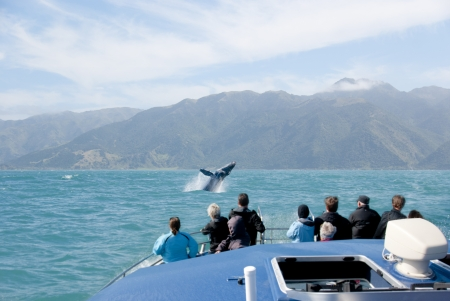 Tourists on whale watching trip looking at a marine mammal breaching Stock Photo