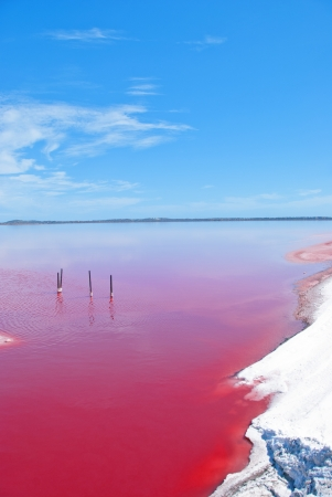 algae: Pink Lake, Western Australia  This lake turns pink in summer cause of an algae with red pigments  Those plants are used for dyeing clothes red