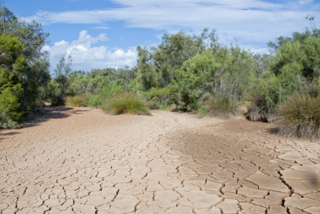 arid climate: Cracked mud tiles in dry river bed  Hutt River, Western Australia