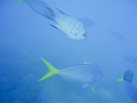 Small shoal of fish near Great Barrier Reef Australia. Underwater shot Stock Photo - 16658456