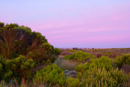 Vegetation with purple sky near Great Ocean Road, Australia Stock Photo - 17692847